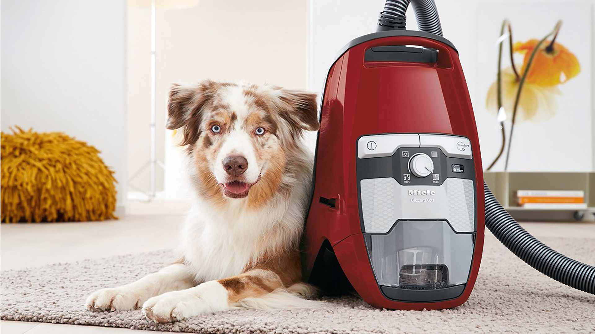 Best Vacuum Cleaner for Dog Hair