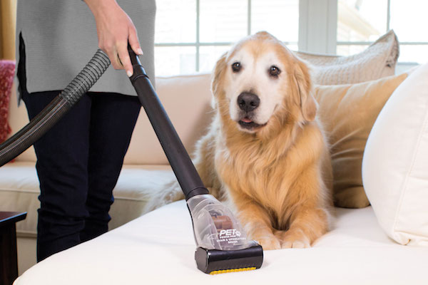 Why Do I Need A Vacuum For Pet Hair?
