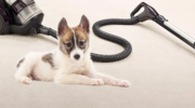 12 Best Canister Vacuums for Pet Hair: Pros and Cons of each Brand